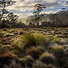 Button grass after rain by ThisMoment