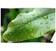 Dew drops on Leaf  Poster