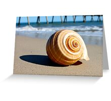 Shell on Beach  Greeting Card
