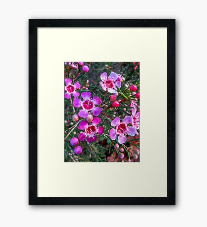 Fading to Pink Framed Print