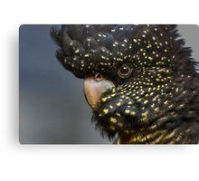 Rad Tail Black Cockatoo - Female Canvas Print