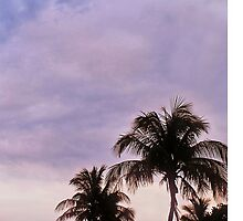 Miami Palmtrees by grindgate