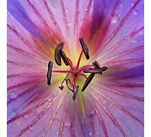 Geranium Stamen in the Rain Photographic Print