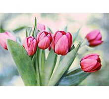 Twilight Tulips Photographic Print