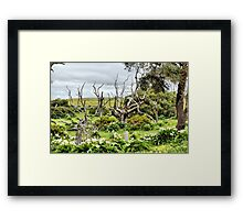 Patch of Lillies Framed Print