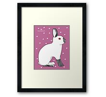Himalayan Agouti (Chinchilla) Rabbit Framed Print