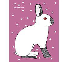 Himalayan Agouti (Chinchilla) Rabbit Photographic Print