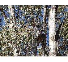 Owls in Camouflage Photographic Print