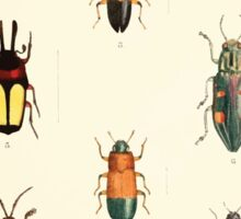Aid to the identification of insects Charles Owen Waterhouse 1890 V1 V2 152 Various Sticker