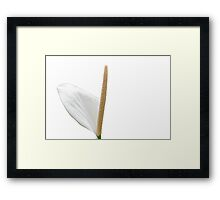 Single White Lily - Side View Framed Print