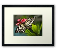 Lace Wing Framed Print