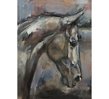 The Kind and Gentle Gelding Photographic Print