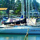 *Port Fairy Safe Harbour - West Coast, Vic.Australia* by EdsMum