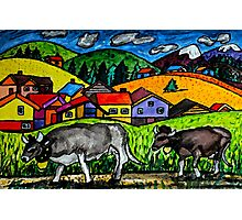 A folksy Cow Hike Photographic Print