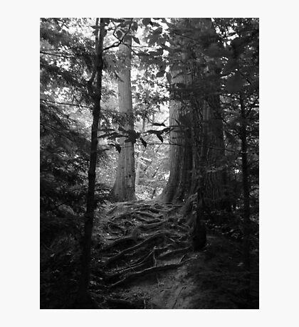 #2681 Photographic Print