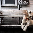 The Country Store Dog by DESY photowerks