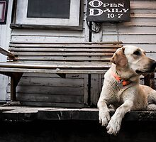 The Country Store Dog by Stenger