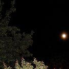 Moon & trees by greenjewels77