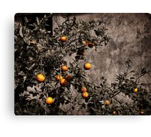 Orange tree on rustic background art photo print Canvas Print