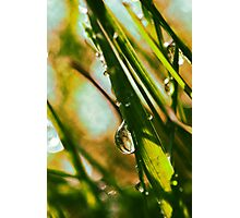 One Drop of Liquid Sunshine Photographic Print