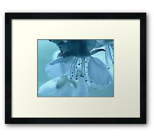 Blossoms in pastel colors Framed Print