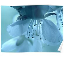 Blossoms in pastel colors Poster