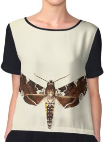 Aid to the identification of insects Charles Owen Waterhouse 1890 V1 V2 070 Protoparce Dalica Canada Women's Chiffon Top