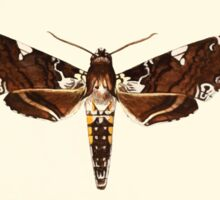 Aid to the identification of insects Charles Owen Waterhouse 1890 V1 V2 070 Protoparce Dalica Canada Sticker