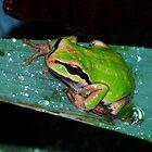 Frog in my Garden by Tori Snow