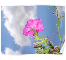 Pink Petunia Flower & Clouds Poster