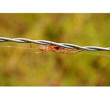 White Spider on Barbed Wire Photographic Print