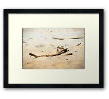 Drift wood Framed Print
