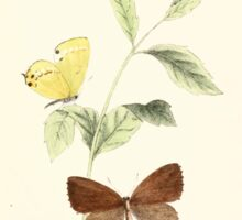 Aid to the identification of insects Charles Owen Waterhouse 1890 V1 V2 112 Thecla Ibara Japan Sticker