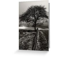 Lonely Tree, lonely sheep Greeting Card