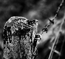 old wooden post.  by PHendersonPhoto