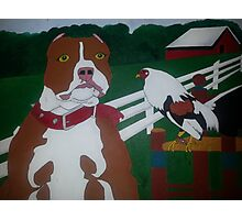 Red Pitbull and Rooster  Photographic Print