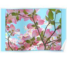 Springtime Pink Blossoms Poster