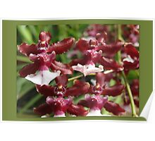 Dragon Orchid Poster