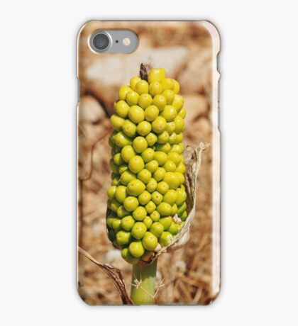 Dragon Lily seed head, Halki iPhone Case/Skin