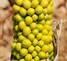 Dragon Lily seed head, Halki Sticker