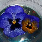 Floating Pansies  by Tori Snow