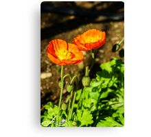Sun shining couple  Canvas Print