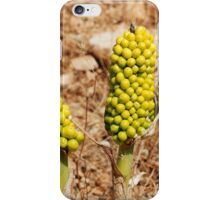 Dragon Lily seed heads, Greece iPhone Case/Skin