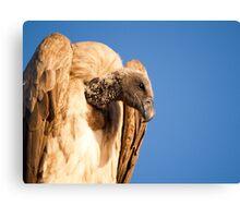 Vulture. Canvas Print