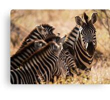 Family - zebra. Canvas Print