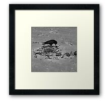 Crow No. 3 Framed Print