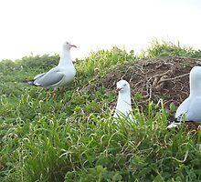 Sea Gull Stares by Drkvixn91