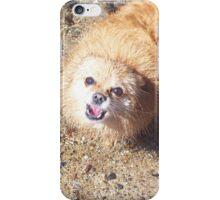 Sea Shy Shih Tzu iPhone Case/Skin