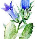 Campanula blue bell flower watercolor by Sarah Trett
