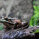 Wood Frog by Poete100